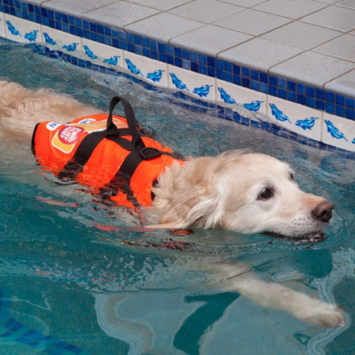 Dogs Get In The Swim With Support Of LEP Funding